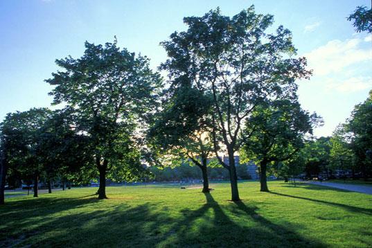 Περιβάλλον & Πράσινο